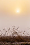 Misty morning sunrise over grass Stock Image