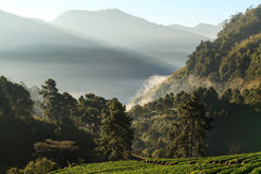 Misty morning sunrise in strawberry garden at doi angkhang mount Royalty Free Stock Photo