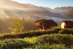Misty morning sunrise in tea plantation at Doi Ang Khang, Chiang Mai, Thailand royalty free stock photos