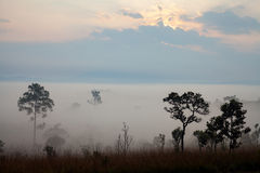 Misty morning sunrise at Thung Salang Luang National Park Phetch Royalty Free Stock Photos
