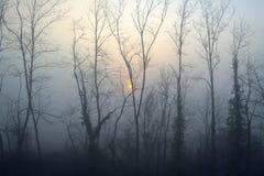 Misty morning. Sunrise with trees Royalty Free Stock Image