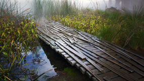 Misty morning in a swamp Stock Images