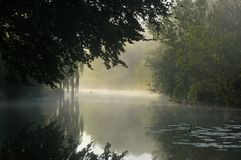 Misty morning in the swamps, trees and their�mirror reflections royalty free stock photography