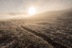 Misty morning trail Royalty Free Stock Photo