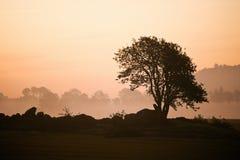 Misty morning tree Stock Image
