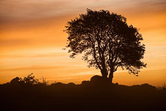 Misty morning tree Stock Photography