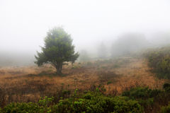 Misty morning with trees in silhouette Stock Image