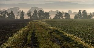 In the misty morning, two horsemen ride along the path between fields. Two horsemen ride in the morning sun and in the fog.Olomouc, Czech republic Royalty Free Stock Images