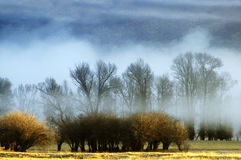 Misty Morning in Valley with Trees Stock Photography