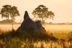 Misty morning view of wide termite mound rising in Okavango. Delta region of Botswana, Africa Royalty Free Stock Image