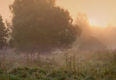 Misty morning in the village Royalty Free Stock Photos