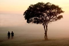 Misty Morning Walk Royalty Free Stock Photography