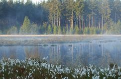 Misty morning on wild forest lake Royalty Free Stock Photo
