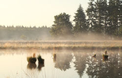 Misty morning on wild lake Royalty Free Stock Photography