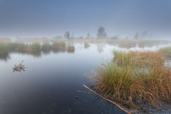 Misty morning on wild lake Stock Image