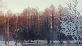 Misty morning in winter forest. Snow covered trees in forest. Mist over river stock video