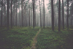 Misty morning in the woods. Stock Photo