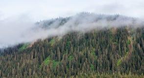 Misty Mountain Covered con los árboles de hoja perenne Fotos de archivo