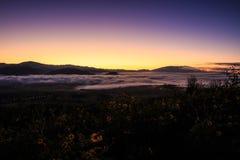 Misty Mountain et champ des fleurs jaunes Images libres de droits