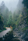 Misty mountain forest Stock Images