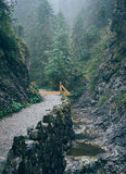 Misty mountain forest. Bialego Valley, Western Tatra Mountains, Poland stock photos
