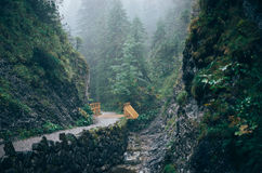 Misty mountain forest. Bialego Valley, Western Tatra Mountains, Poland royalty free stock photos