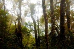 Misty mountain forest of Mount Kinabalu, Royalty Free Stock Photo