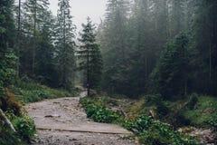 Misty mountain forest. Tatra National Park stock photos