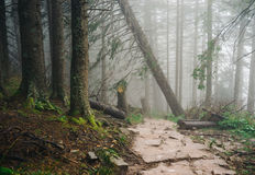 Misty mountain forest Stock Image