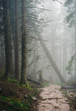 Misty mountain forest Royalty Free Stock Images