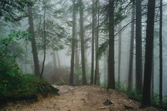 Misty mountain forest. On the way to Sarnia Rock, Tatra Mountains Royalty Free Stock Photography