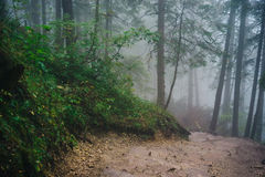 Misty mountain forest. On the way to Sarnia Rock, Tatra Mountains Royalty Free Stock Image
