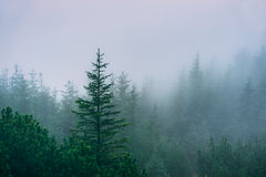 Misty mountain forest Royalty Free Stock Photo