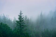 Misty mountain forest. Western Tatra Mountains, Poland royalty free stock photo