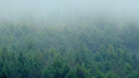 Misty Mountain Forest In Wind. Rugged wilderness forest with mist moving across stock video footage