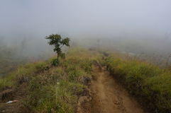 Misty mountain hike. Hike on trail through misty mountains with trees and vegetation. Lombok, Indonesia Stock Image
