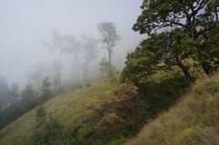 Misty mountain hike. Hike on trail through misty mountains with trees and vegetation. Lombok, Indonesia Stock Photography