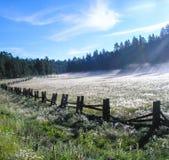 Misty Mountain Meadow Imagen de archivo libre de regalías