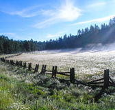 Misty Mountain Meadow Royalty Free Stock Image