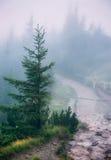 Misty mountain path. Through the fir forest. Western Tatra Mountains, Poland stock photos