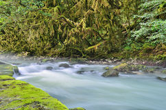 Misty mountain river. Clear misty mountain river under the branches of boxwood Royalty Free Stock Photography