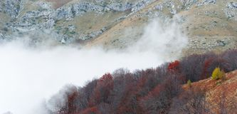 Misty mountain slops. Clouds of fog covering a beech forest Royalty Free Stock Image