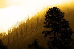 Misty Mountain Steam Rising avec les arbres et le flanc de montagne rocailleux C photo libre de droits