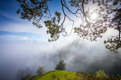 Misty mountain summer landscape with pine tree Royalty Free Stock Photography