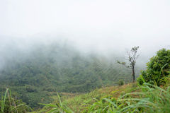Misty mountain Stock Photography