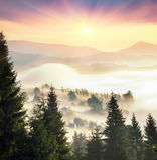 Misty mountain tsunami. Morning mist filled peaks ridges mountain valleys in wild Carpathian Ukraine. Golden sunrise rays shine on the beautiful slopes of the Royalty Free Stock Photo