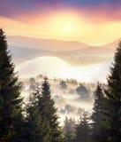 Misty mountain tsunami. Morning mist filled peaks ridges mountain valleys in wild Carpathian Ukraine. Golden sunrise rays shine on the beautiful slopes of the Stock Images