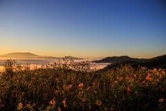 Misty Mountain und Feld von gelben Blumen Stockbild