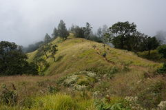 Misty mountain vista. With trees and vegetation Royalty Free Stock Images