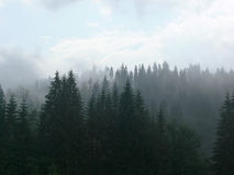 Misty mountains. Mist in the mountains royalty free stock image